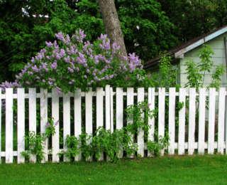 Protéger son jardin grâce aux haies et clôtures