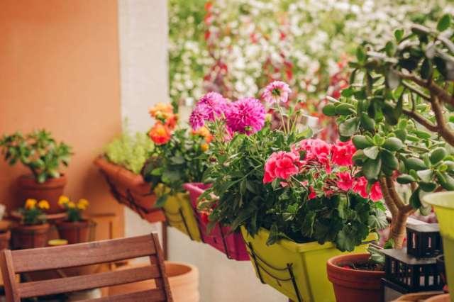jardinière appartement