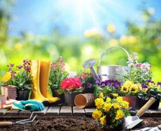 6 astuces pour l'entretien du jardin