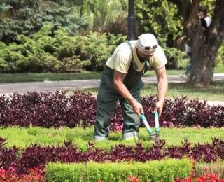 Choisir son jardinier : conseils et astuces