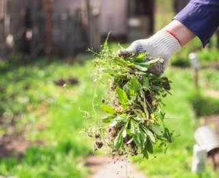 Halte aux mauvaises herbes dans le jardin !