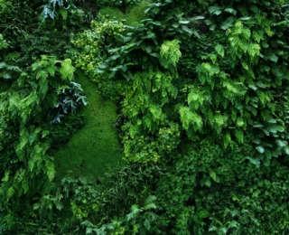 Mur végétalisé : conseils et informations