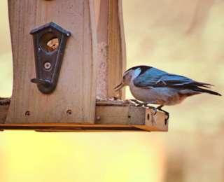 Quelle graines pour attirer quels oiseaux ?
