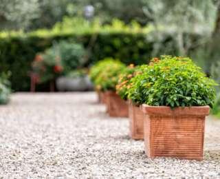 Plantes extérieures : pourquoi favoriser les pots en terre cuite ?